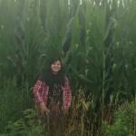 corn crop 2014